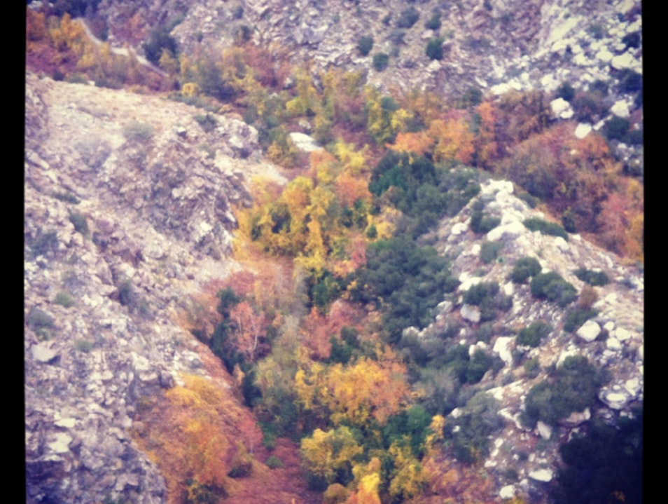 Fall Foliage from the Palm Springs Aerial Tramway Palm Springs California United States