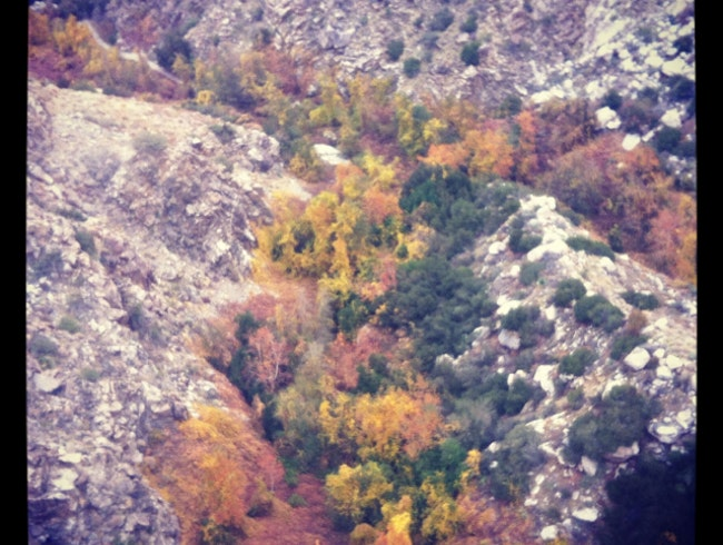 Fall Foliage from the Palm Springs Aerial Tramway