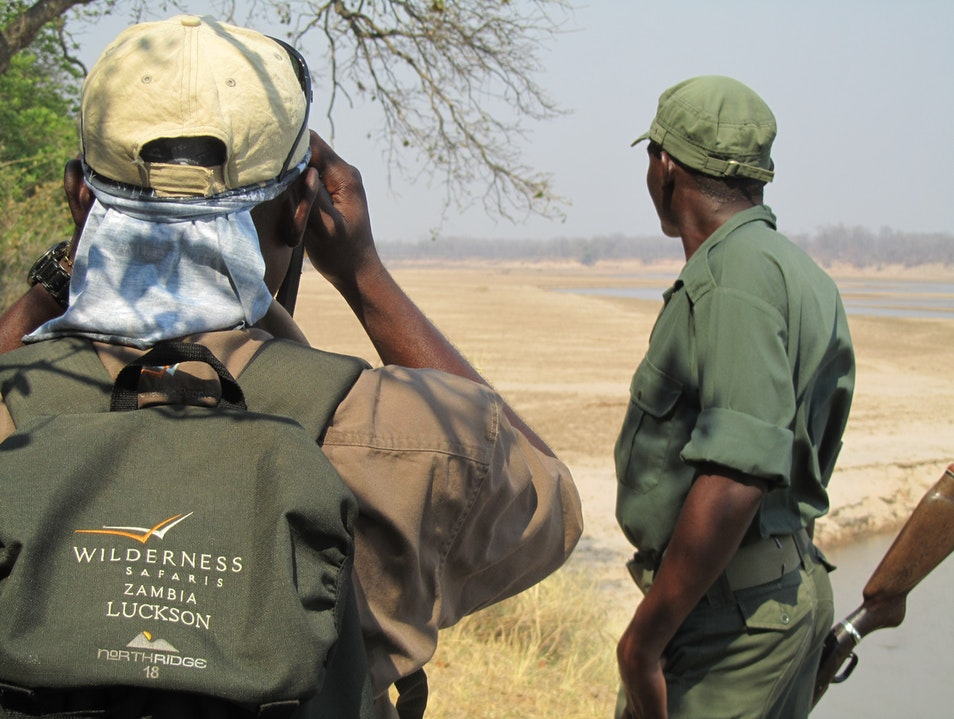 Tracking, then being tracked by (!) a Lion Pride
