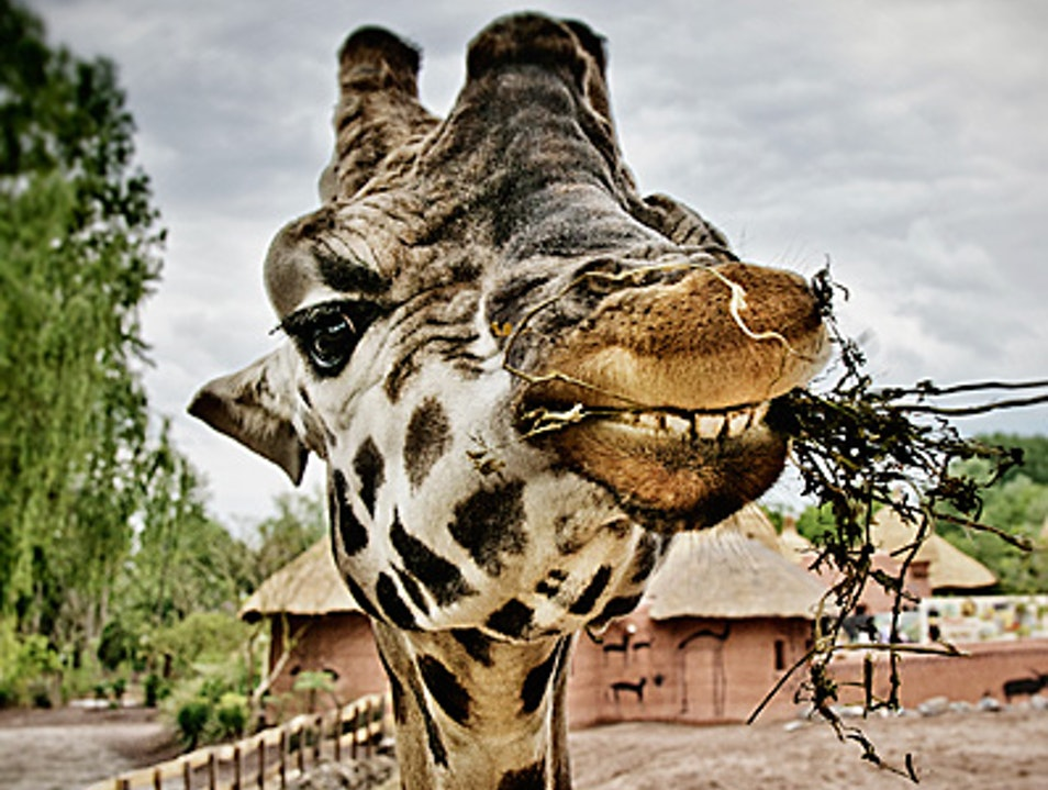 Get Up Close and Personal with Animals in this Unique Zoo