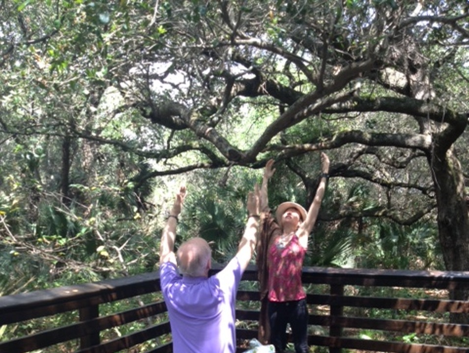 Delray Oaks Nature Trail Tai Chi Delray Beach Florida United States