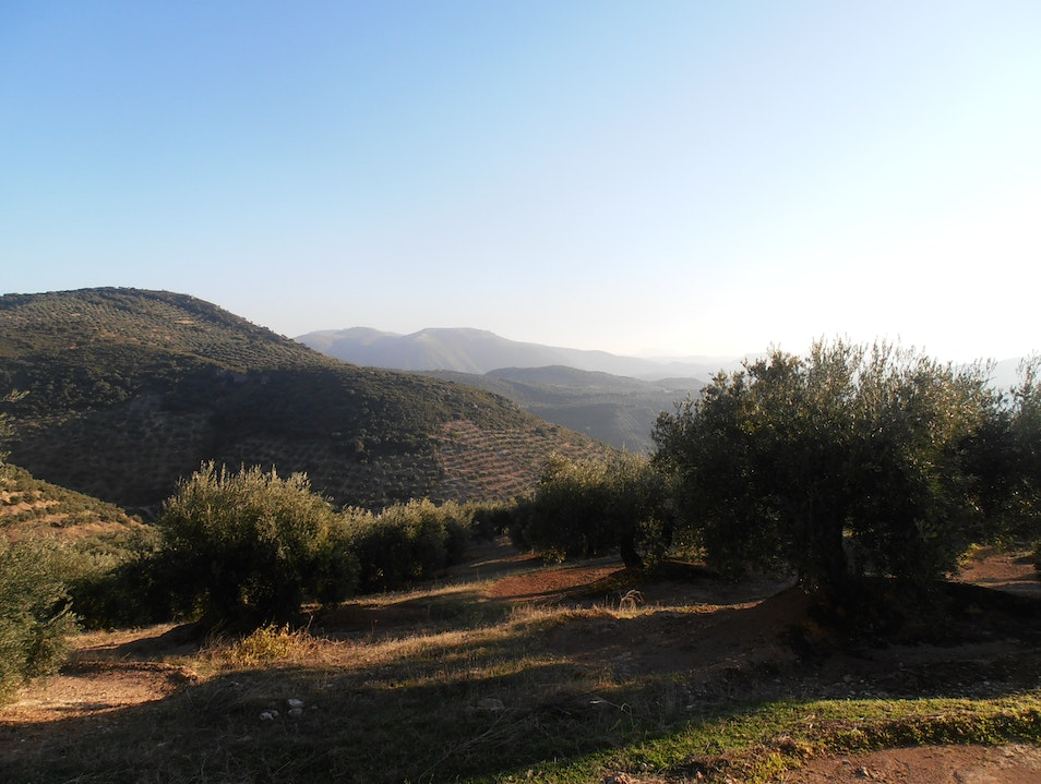 Wandering the Green Sea of Olive Groves Jaén  Spain
