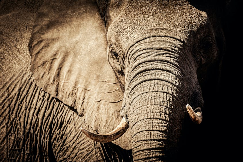 Personal encounters with elephants are one of the most moving experiences in the natural world.