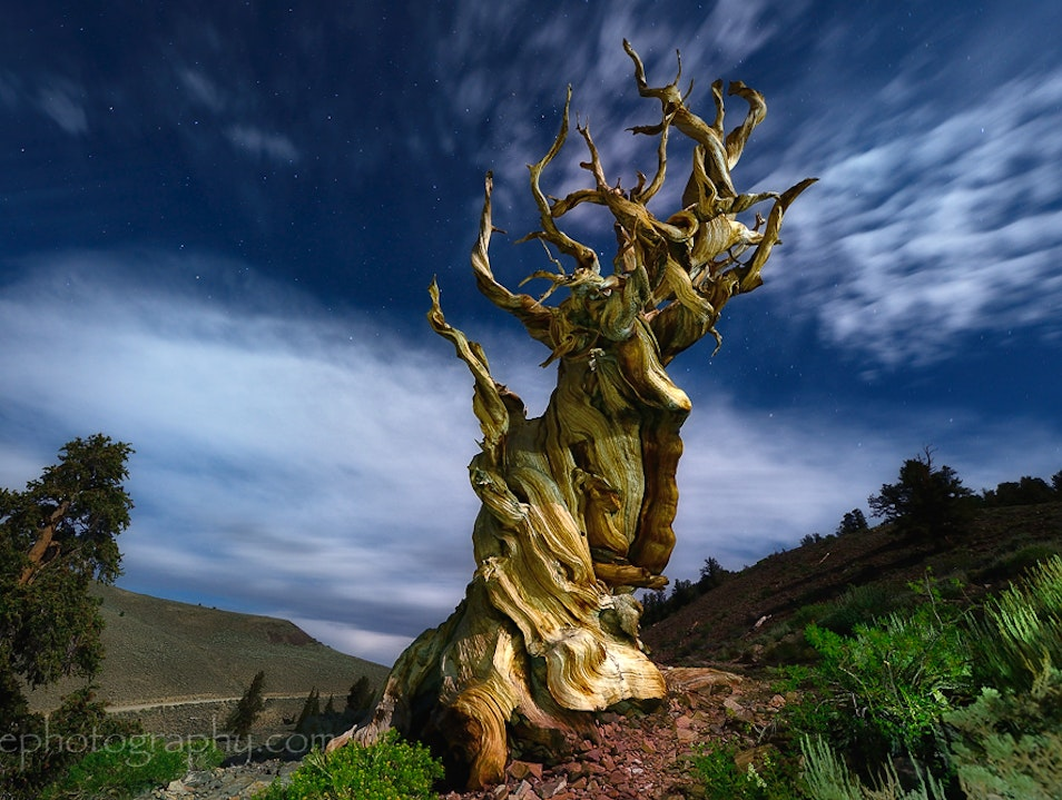 The Oldest Living Things in the World Bishop California United States