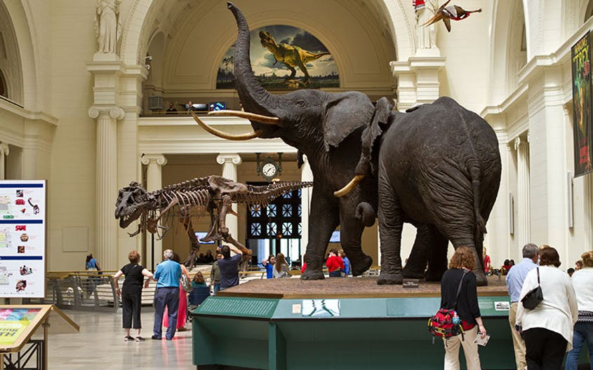 Head to the Field Museum to see the largest T-rex specimen ever discovered.