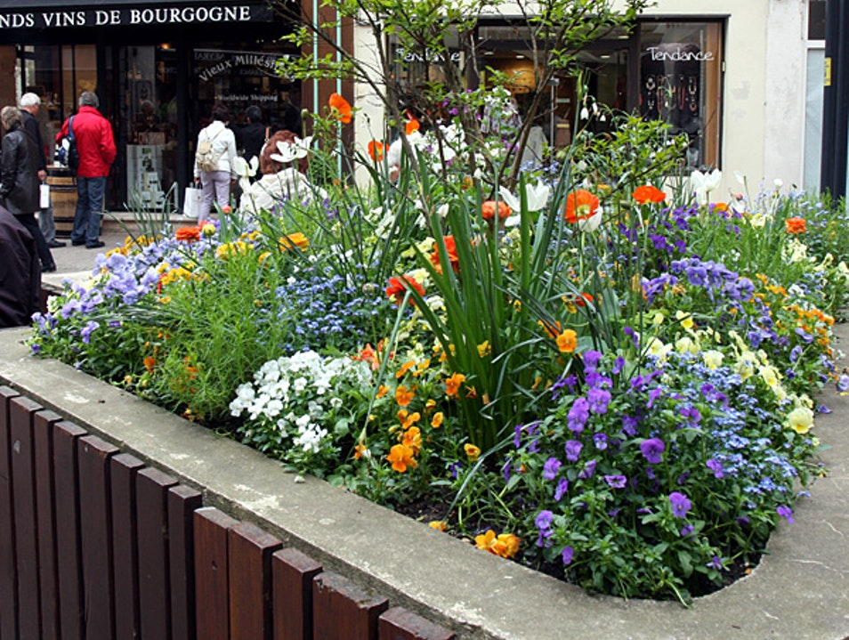 Beaune in bloom each spring Beaune  France