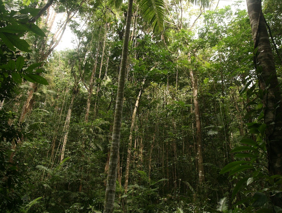 Help Preserve Australia's Daintree National Park Stewart Creek Valley  Australia