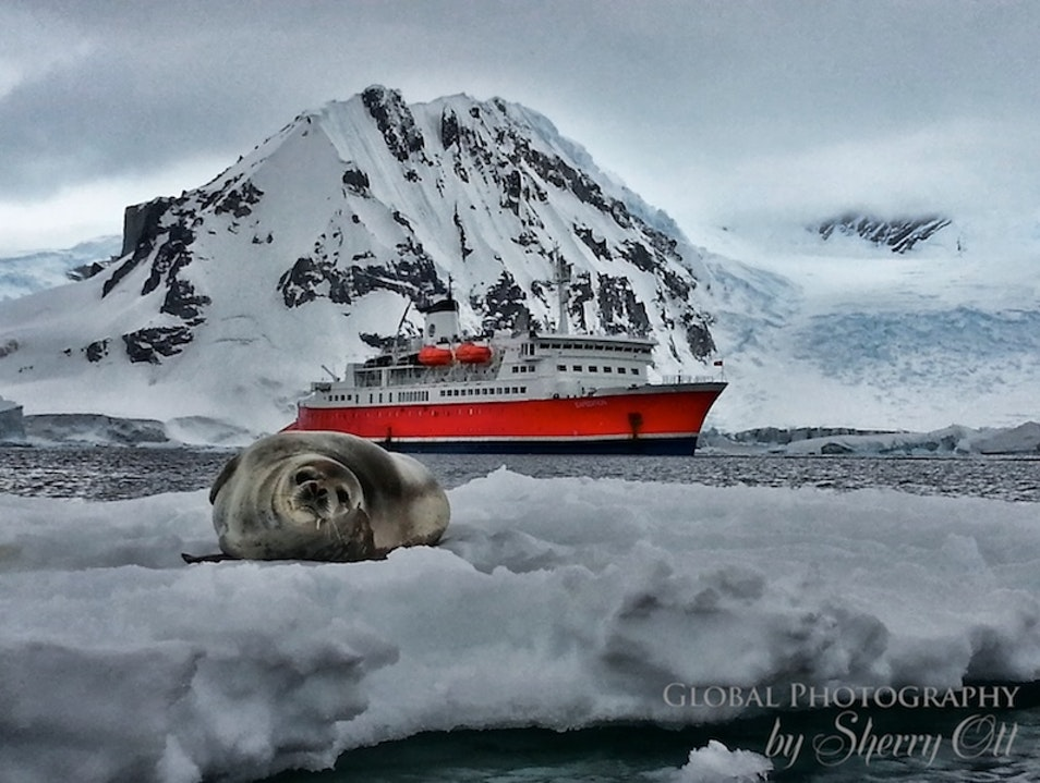 A Cruise for the Non-Cruiser    Antarctica
