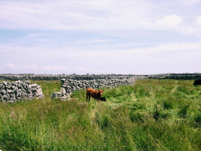 Biking Through the Aran Islands