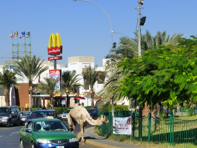 A lone camel wanders the streets of Aqaba.....