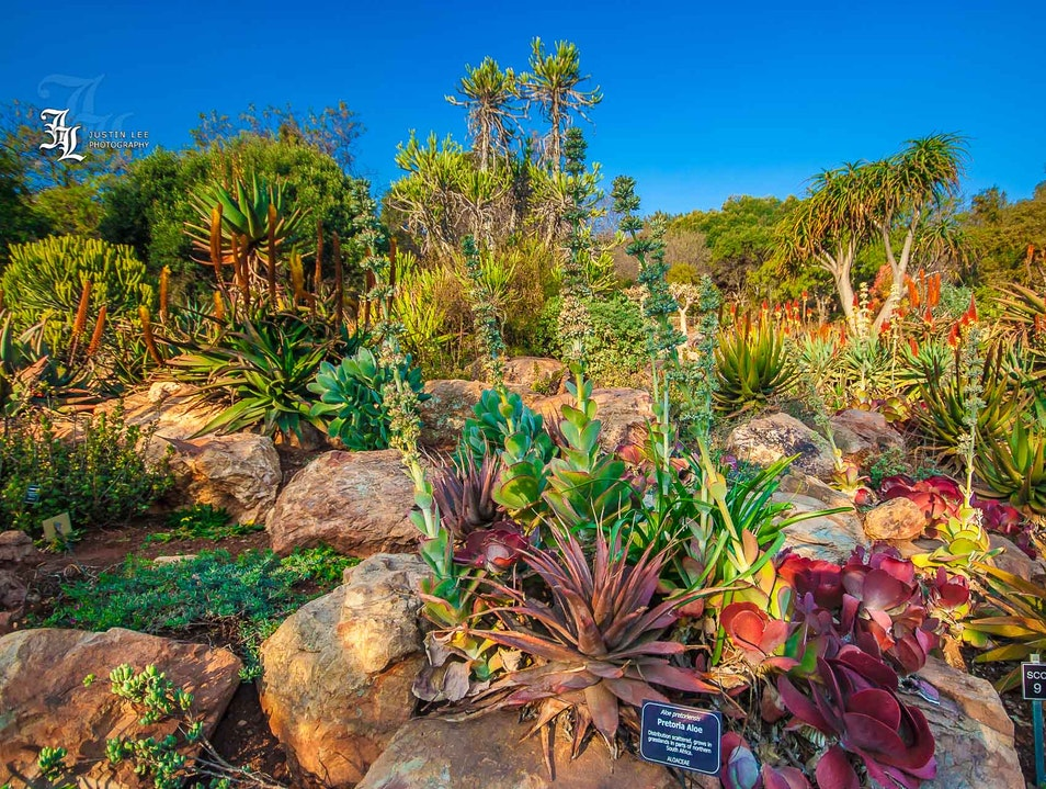 Wander Through Walter's Garden Krugersdorp  South Africa