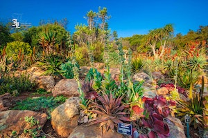 Spend Some Time Outdoors: Top Green Spots in JHB