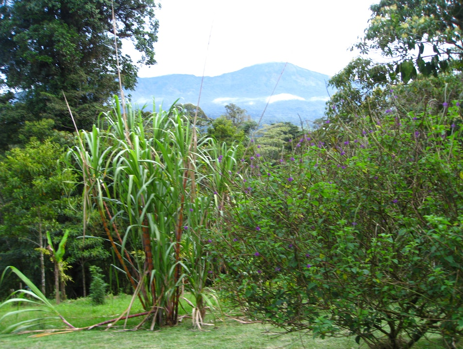 Getting personal in the Costa Rican rainforest San Miguel  Costa Rica