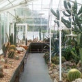 Volunteer Park Conservatory Seattle Washington United States