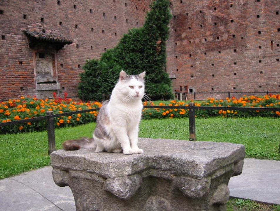 The Cats of Castello Sforzesco Milan  Italy