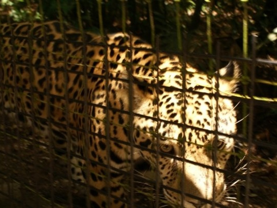 See the exotic animals you hear at night La Democracia  Belize