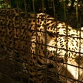 The Belize Zoo La Democracia  Belize