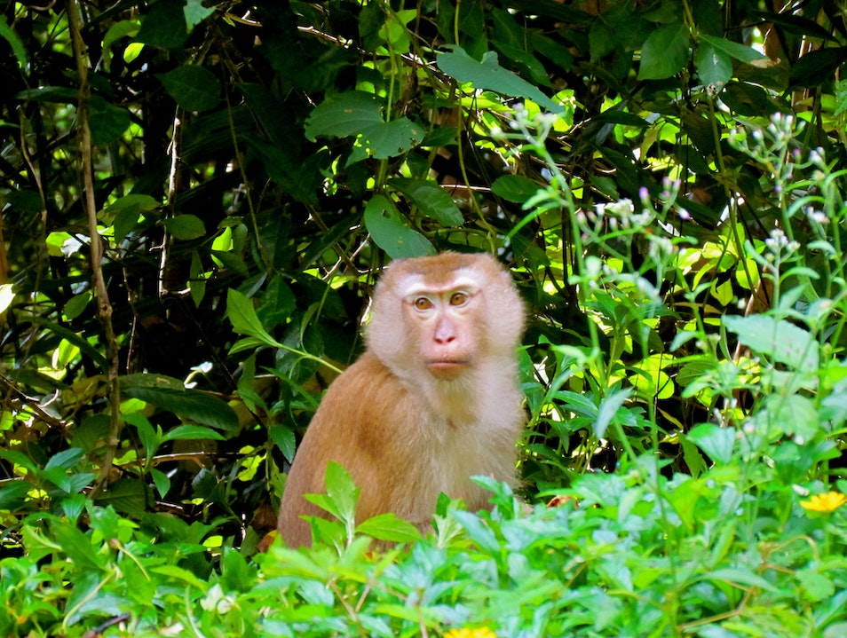 Play with Monkeys on Monkey Hill