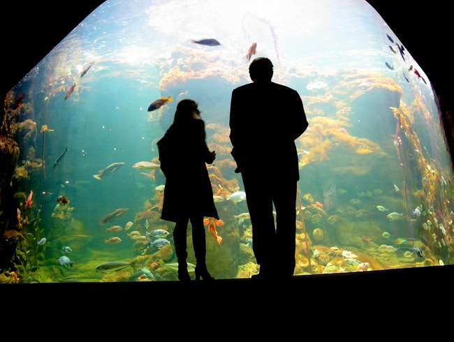 Get Hands-On at the California Academy of Sciences