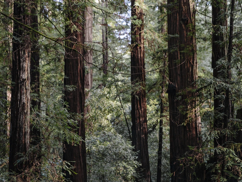 Armstrong Redwoods State Natural Reserve Inverness California United States