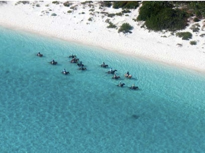 Provo Ponies Providenciales And West Caicos  Turks and Caicos Islands