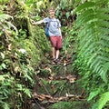Jacko Steps Saint Paul Parish  Dominica