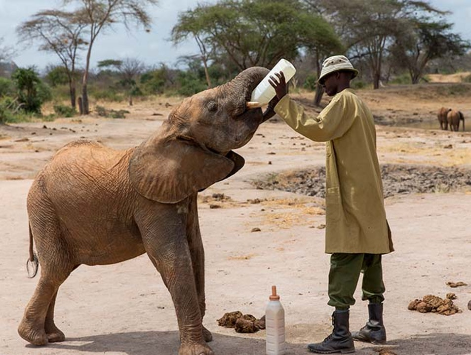 Meet baby elephants at the David Sheldrick Wildlife Trust Nairobi  Kenya