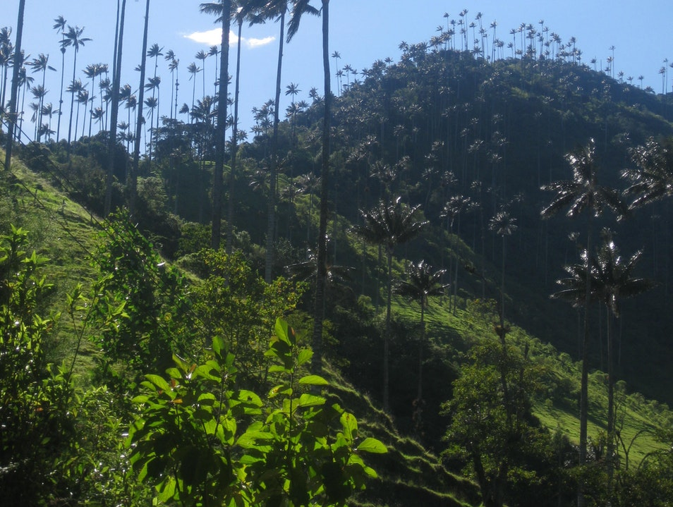 Hiking through Valle de Cocora Salento  Colombia
