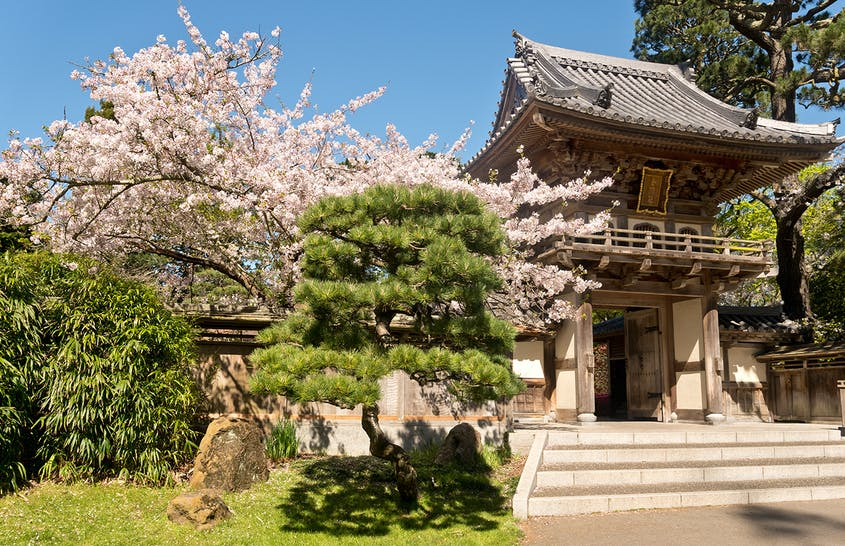 Stay for tea in San Francisco's Japanese Tea Garden and you'll enjoy a lovely view of the spot's cherry blossoms.