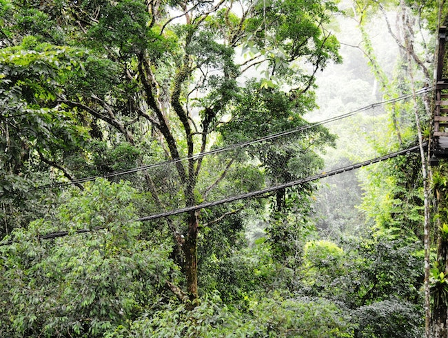 Traipse Through the Treetops in the Peruvian Amazon