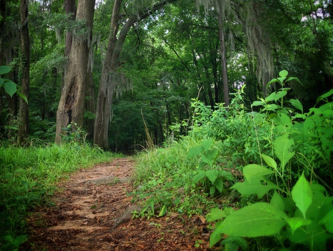 trail running under the Spanish Moss, along the Savannah River