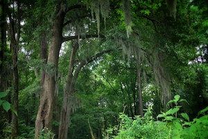 trails between the Savannah River and the Augusta Canal