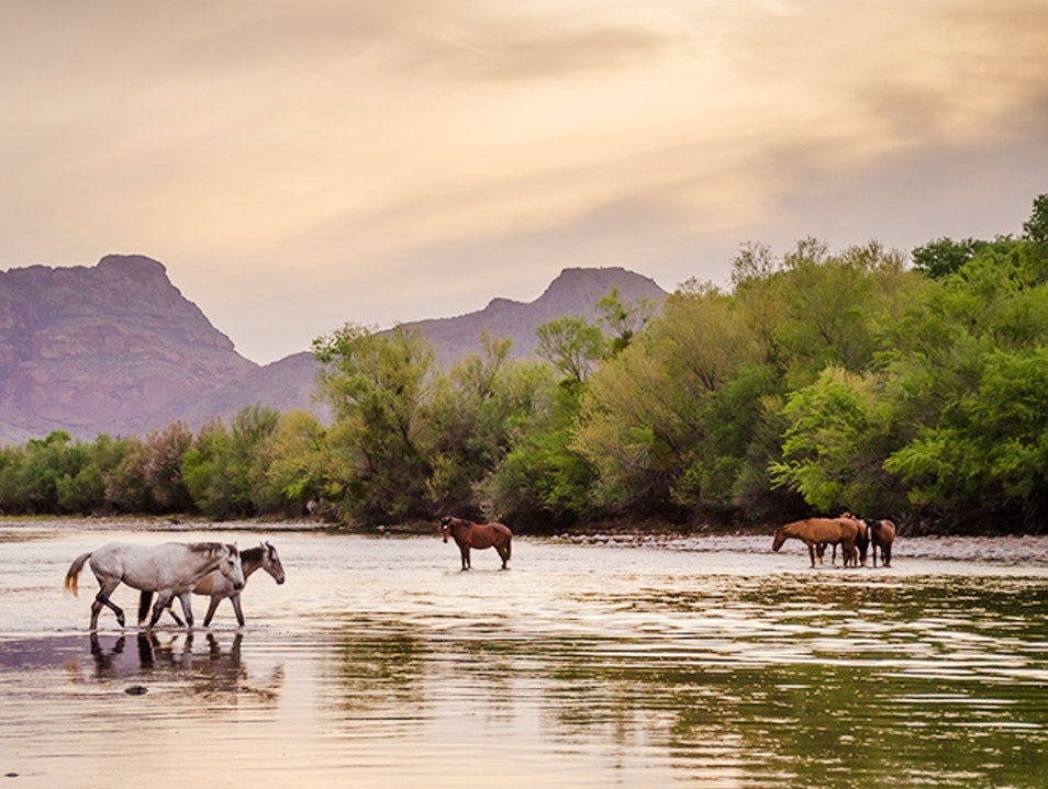 Kayak the Lower Salt River with Arizona Outback Adventures Scottsdale Arizona United States
