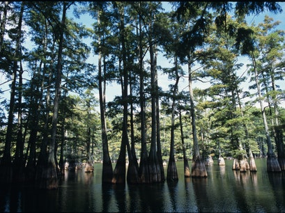 Big Thicket National Preserve Kountze Texas United States
