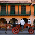 See Cartagena by Horse and Carriage  Cartagena  Colombia