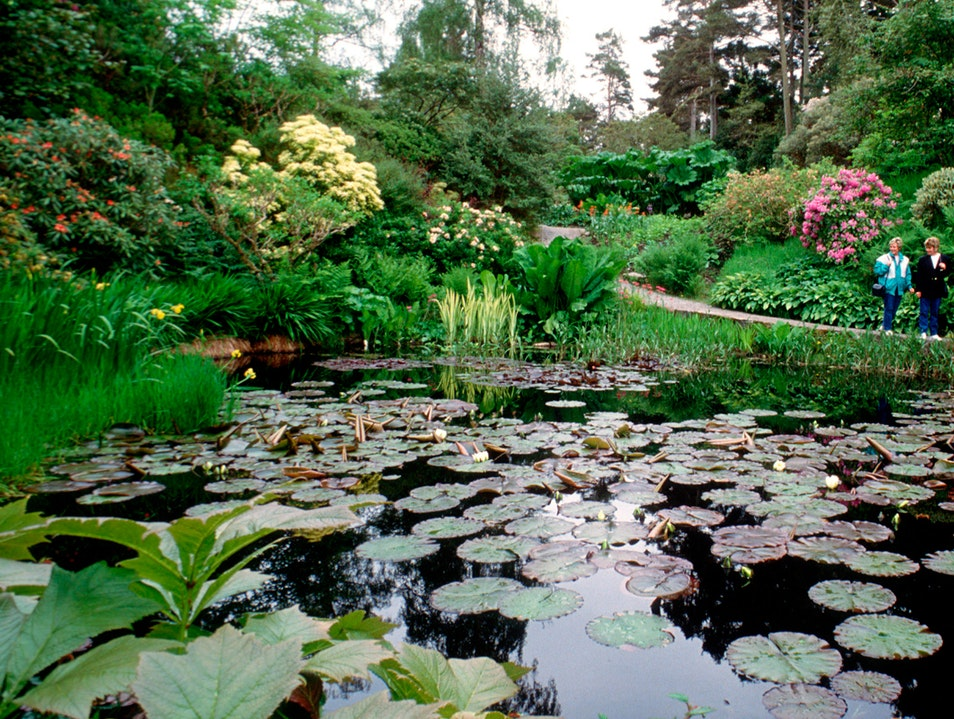 Inverewe Gardens  Poolewe  United Kingdom