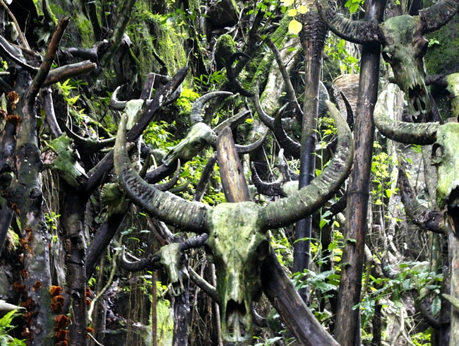 Thousands of cow skulls make a sacred shrine for the Wa people