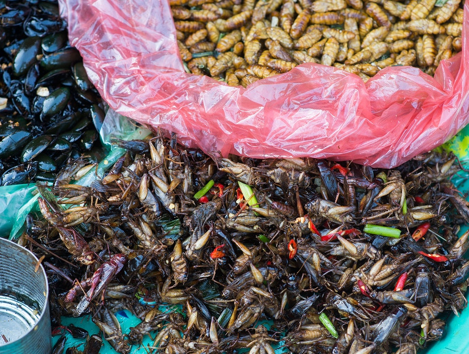 Deep fried bugs Siem Reap  Cambodia