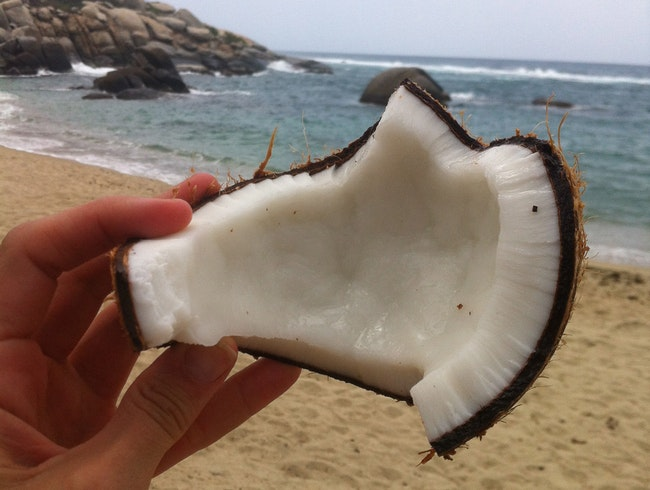 Feasting on Coconuts in Parque Tayrona