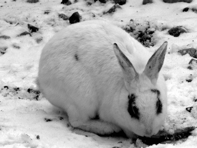 Rabbits in the Snow!  Gangchon Train Station