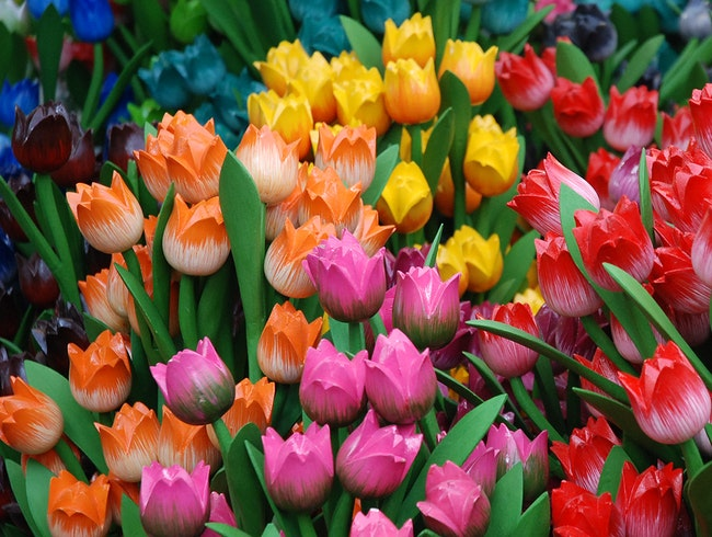 Tulips at the Bloemenmarkt