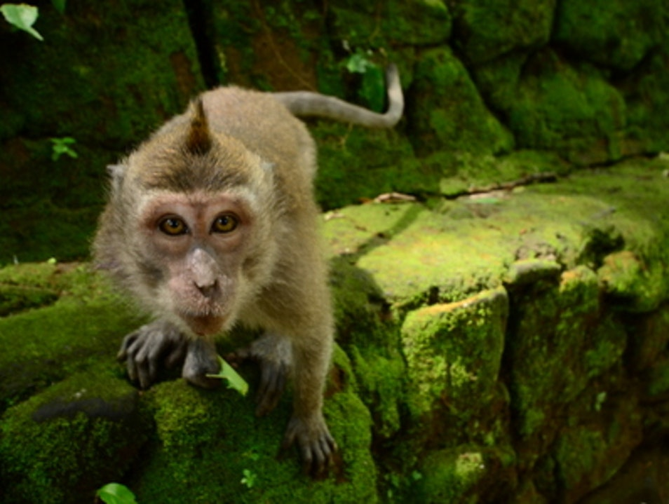 """""""What you lookin' at Willis?"""" Ubud  Indonesia"""