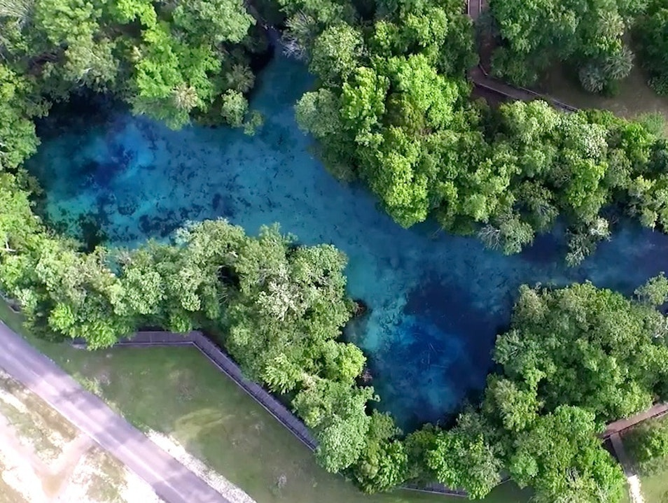 Connecting with Nature in Crystal River