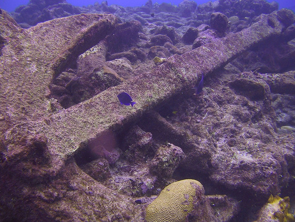 Diving at Anchor Wall  West Bay  Cayman Islands