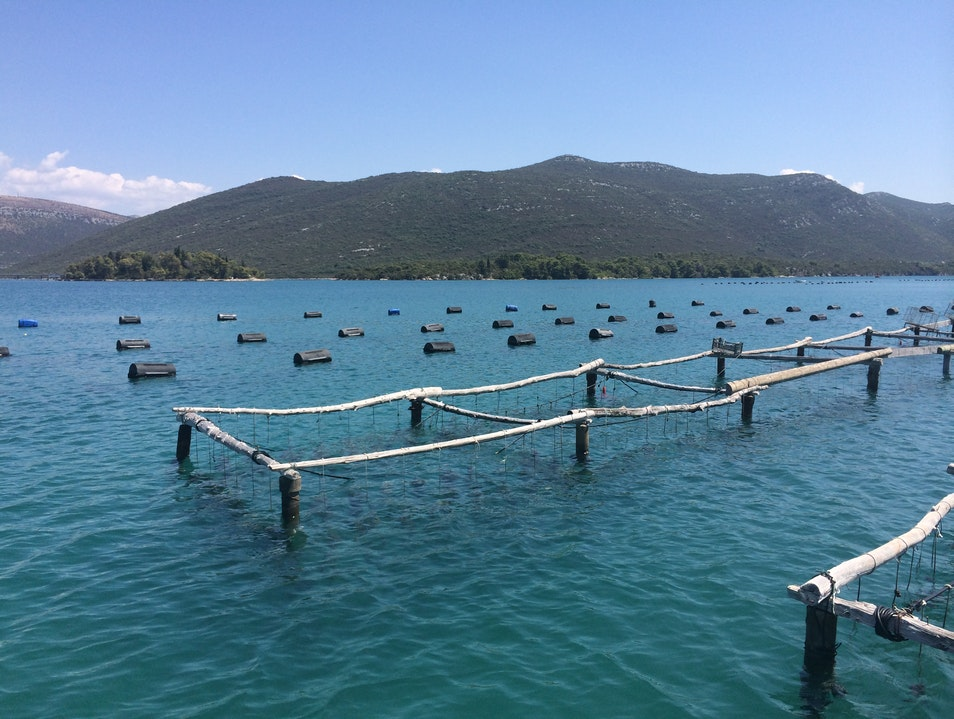 Oyster Farms in Mali Ston Mali Ston  Croatia