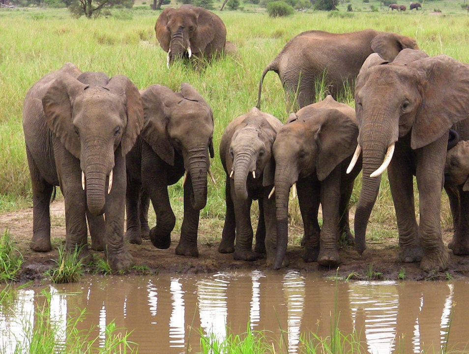 Wild About Elephants Tarangire National Park  Tanzania