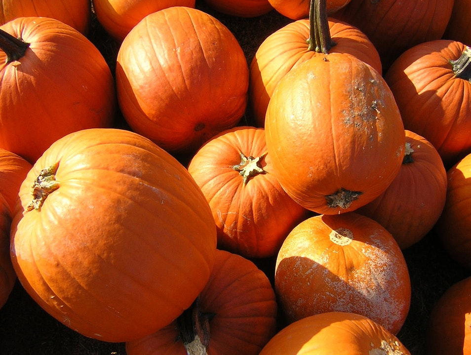 Pumpkins, Gems, and Honey Trenton New Jersey United States