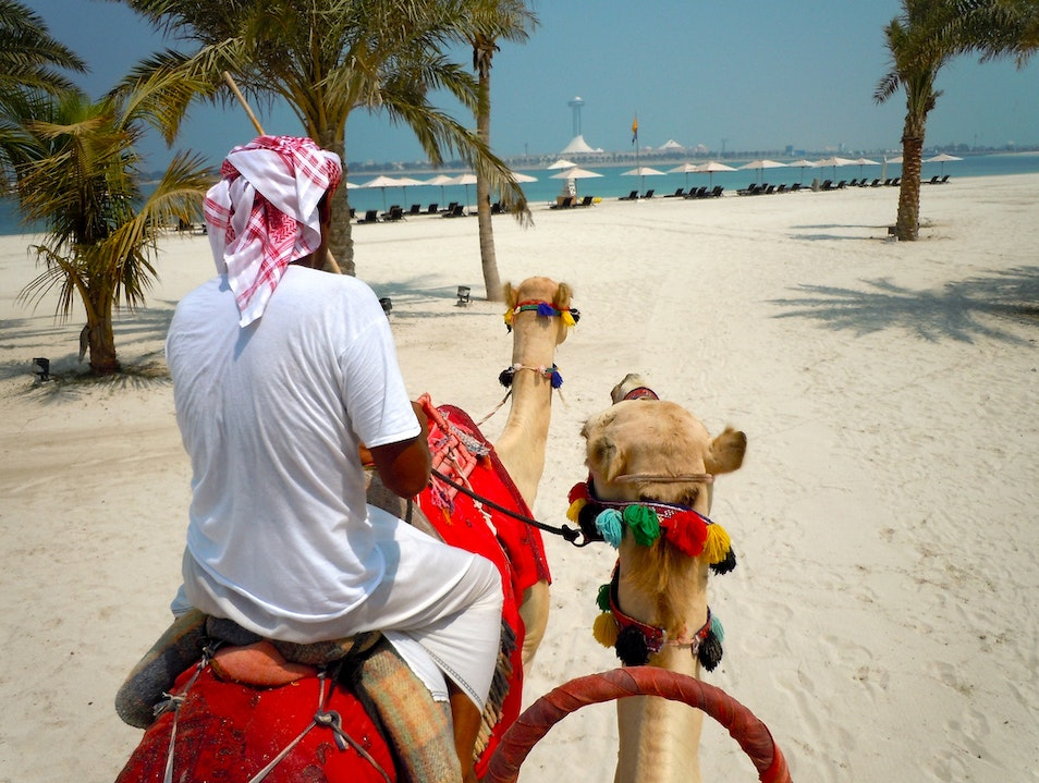 Humps and Bumps of Camel Riding Abu Dhabi  United Arab Emirates