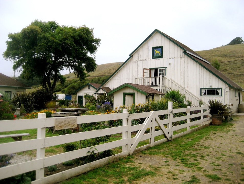 Goats, Berries, and More! PESCADERO California United States
