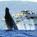PacWhale Eco-Adventures Lahaina Hawaii United States